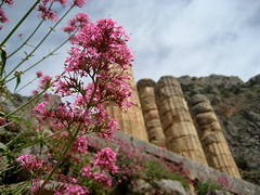 Temple of Apollo (Josh Clark) Tags: pink flower architecture temple ancient ruins columns delphi greece