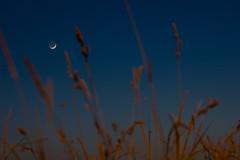 Notturno, Camden Lock. (drmauro) Tags: italy nikon tramonto d70 explorer natura luna cielo campo dslr astratto varese notte sera sterpaglie schiranna drmauro primoquarto voltaceleste maurodelromano