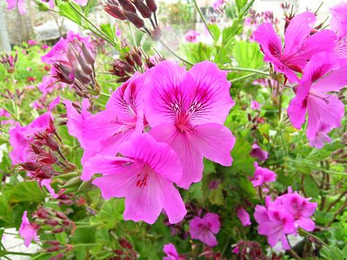 flores jardim ano todo : flores jardim ano todo:Flores – Dicas e Cuidados Especiais para Flores de Jardim
