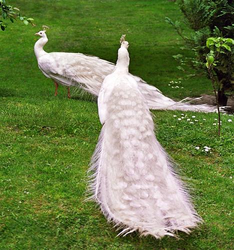 Sve vrste Ptica 522374644_c45a693e02