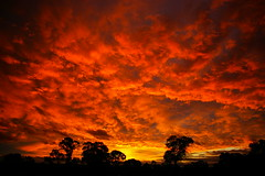 Sunset over jamo park. (JamesBarrett) Tags: trees sunset red sky orange tree texture yellow clouds sunrise gum fire pentax sydney australia scape naturesfinest istdl diamondclassphotographer arfternoon