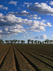 Puffy clouds over freshly tilled farm field (ue06) Tags: california blue trees sky field silhouette northerncalifornia clouds woodland alley farm conservation sunny heartland valley crop watershed land sacramento agriculture davis solano winters agricultural yolocounty fever centralvalley cachecreek putahcreek naturesfinest yolo flickrsbest sfchronicle96hrs abigfave wowiekazowie