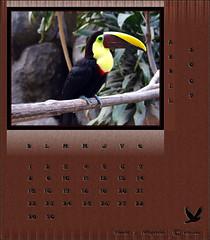Zoo Calendar April