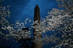 Washington Monument - by citron_smurf