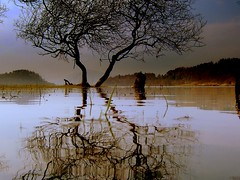 Still rising slowly (Nicolas Valentin) Tags: reflection tree water scotland lochlomond ecosse balmaha abigfave