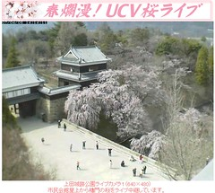 櫻花滿開! 20070406上田城跡公園