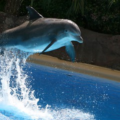 The Dolphin Habitat (Cayusa) Tags: vegas vacation lasvegas dolphin mirage secretgarden week13 cwd explored interestingness309 i500 tacwd takeaclasswithdavedave cwdexplore cwdweek13 cwd131 explore10apr07