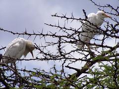 Close up of birds