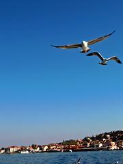 Bykada-Istanbul (derya_t) Tags: turkey island islands trkiye istanbul turkish bykada adalar fotografkraathanesi turchiatrkiye askanatolia