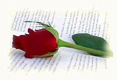 Rosa y Libro de Sant Jordi