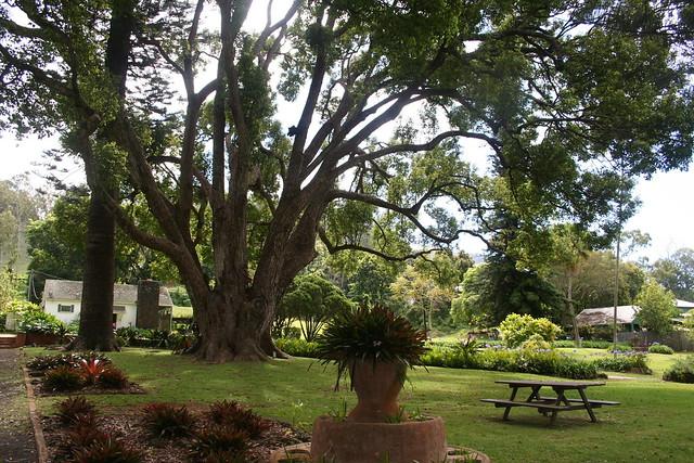 Vineyard Garden