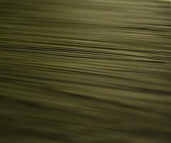 Green Sticks (Berk McGowan) Tags: green sticks dof f2 d200