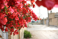 The valley of hope (~mohsentaleb) Tags: pink flower oldhouse valley shushtar