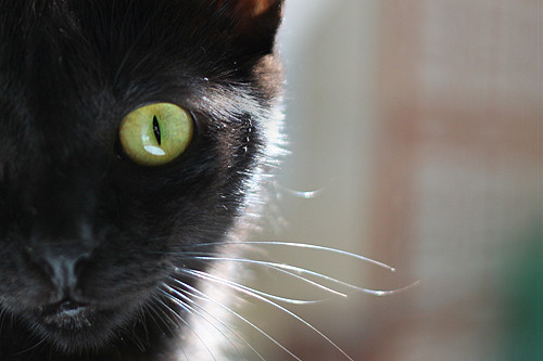 An Evolution of Self: The One-Eyed Black Cat