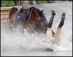 Falling From Grace (Katford) Tags: horses fall water spring maryland crosscountry jesters eventing karenoconnor diamondclassphotographer flickrdiamond mcta