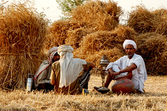 Taking a break (Naeem Rashid) Tags: pakistan rural d50 outdoors nikon village outdoor wheat harvest may punjab 2007 villagers villager 5photosaday 18200vr 24hoursofflickr mangamandi