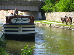 The Georgetown and its mules