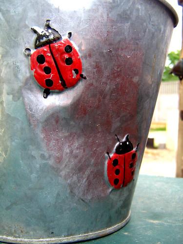 6 ans... -- coccinelle petit flower flowerpot bête bon ladybird jardin pot gris dieu lady