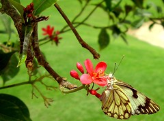 Picture Perfect. (Furhan H!) Tags: pink pakistan red green beautiful butterfly wings institute textile karachi sindh textileinstituteofpakistan