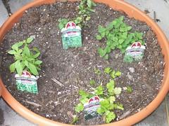 Herbs May 07
