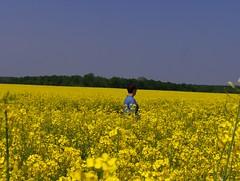 Colza! (Joe Shlabotnik) Tags: flowers france yellow rape peter canola 2007 rapeseed colza april2007 justpeter