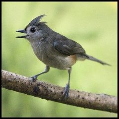 Big Creek Greenway Bird Walk Event