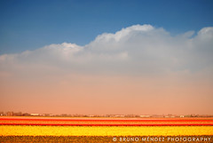 Flickr Landscape (BRUNO MNDEZ PHOTOGRAPHY) Tags: flowers sky flores holland color colour netherlands field landscape flickr colours paisaje colores cielo campo holanda coolest keukenhof lisse naturesfinest mndez superbmasterpiece goldenphotographer diamondclassphotographer brunomndez brunomndezphotography superlativas flickrlandscape