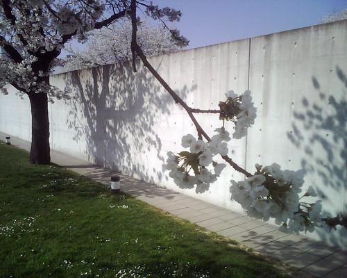 springtime conference pavillon tadao ando