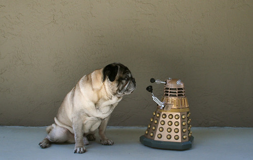Pug Poses With Dalek