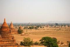 (Nixie+) Tags: travel green tower d50 temple buddha buddhism myanmar grassland bagan nyaungu myammar pagoota