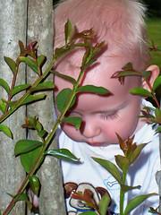 gideonplant1