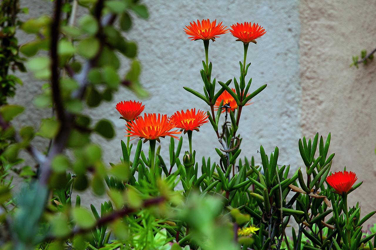 Barcelona Photoblog Garden Flowers Musings