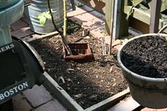 patio planter 2