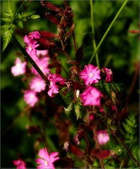 ZOO flower (Kirsten M Lentoft) Tags: pink sunlight flower greenery naturesfinest colorphotoaward momse2600 kirstenmlentoft