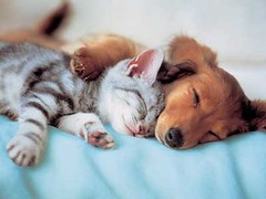 Sleeping Cat and Dog