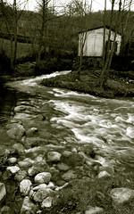 river (rakelilla/robin) Tags: water robin rio sepia d50 river agua nikon asturias raquel nikond50 rioseco rakel asturies parquenaturalderedes sobrescobio sobrescobiu rakelilla rusecu