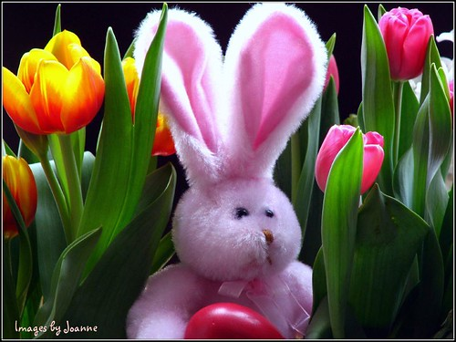 Easter is coming! by Through Joanne's eye.