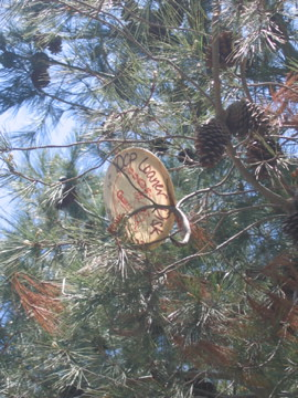 Frisbee Eating Tree