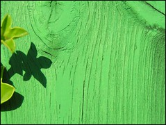 (Tal Bright) Tags: wood shadow abstract green nature telaviv minimal colorfield shapira
