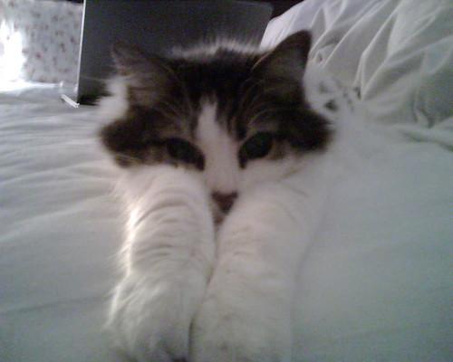 Molly Takes a Nap