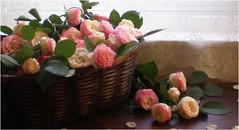 (Lara's  Stuff) Tags: flowers roses flower rose basket windowlight lacecurtain flowerbasket pinkroses fleurtography edenroses woodenbuffet