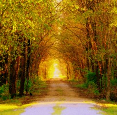 The Road Less Traveled (Little Laddie) Tags: road trees nature path tunnel archway specland jalalspagesmasterpiecealbum tribehorizon