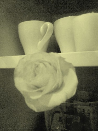 20070424 - Blooming rose!