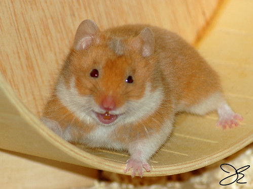 Funny Hammie