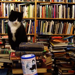 Yes, would you like to buy a book? (0olong) Tags: cat upload scotland chaos glasgow books bookshop 0olong voltaireandrousseau babyboris thecatwhoturnedonandoff