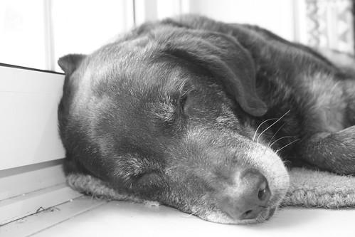 Fado sleeping I