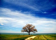 Lake Edge Tree