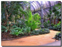 A piece of jungle / Un trozo de selva (. SantiMB .) Tags: barcelona park parque trees espaa plants garden spain plantas rboles searchthebest palmeras catalonia palmtree catalunya parc hdr orton jardn ciutadella umbracle blueribbonwinner splendiferous supershot tonemapping outstandingshots fattal singleraw artizen abigfave umbrculo ultimateshot umbraculum holidaysvacanzeurlaub favoritegarden travelerphotos goldenphotographer wowiekazowie diamondclassphotographer flickrdiamond