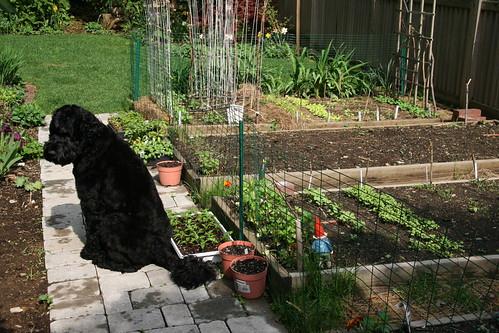 skip by garden