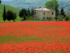 Red camp (Giuseppe Andrea) Tags: flowers red italy house tree field farmhouse bravo blossoms poppy poppies abruzzo papaveri gransasso naturesfinest vestea abigfave superaplus aplusphoto lifebeautiful favoritegarden superbmasterpiece travelerphotos diamondclassphotographer flickrdiamond explorewinnersoftheworld